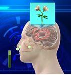 Mùi hương nước hoa tác động đến dây thần kinh như thế nào?