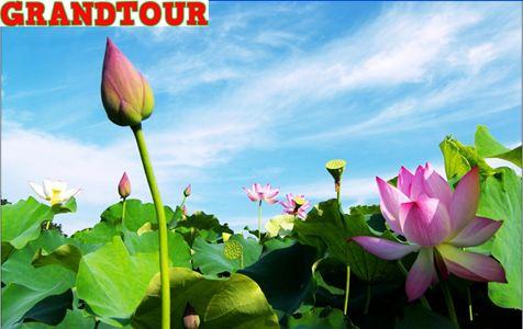 Đồng Tháp - Mùa nước nổi (2N1Đ)