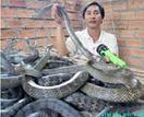 Học đến lớp 9, làm giàu từ mô hình nuôi chim, rắn
