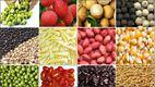 Hợp đồng giữa Song Anh và Cty CP nông sản sạch VietGarden