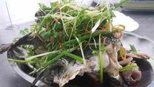 Cá Song Trân Châu
