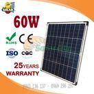 Pin năng lượng mặt trời Poly 60w