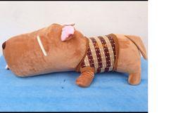 Chó bông Puco