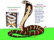 Bao cao su cao cấp Sagami Xtreme Cobra : Mua 6 hộp tính tiền 5