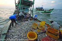 Xuất khẩu Nông, Lâm, Thủy hải sản Việt Nam ước đạt 8 tỉ USD