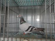 Bổn chim Barcelona (4100840)