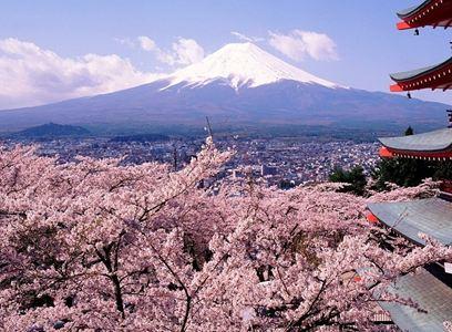 KHÁM PHÁ MÙA HOA ANH ĐÀO NHẬT BẢN TOKYO - NARITA - FUJI - YAKOHAMA