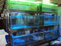 Bể cá nhà hàng mẫu 04