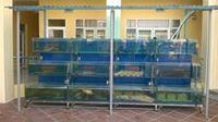 Bể cá nhà hàng mẫu 02