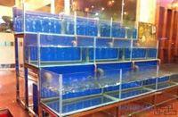 Bể cá nhà hàng mẫu 01
