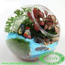 Terrarium AquaGarden 138