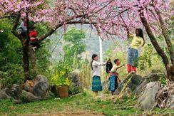 Mai Châu - Hòa Bình