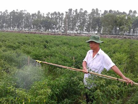 Description: Anh Lê Văn Đáo ở xã Thành Công (Khoái Châu) phun thuốc trừ sâu tự chế từ thảo mộc cho ruộng ớt của gia đình