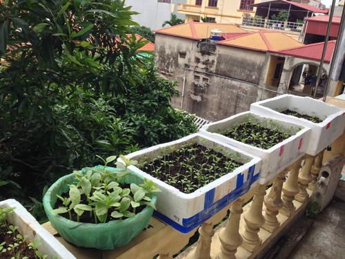 Description: HN, vườn rau sạch, lan can, cô nàng 9x, ngộ độc