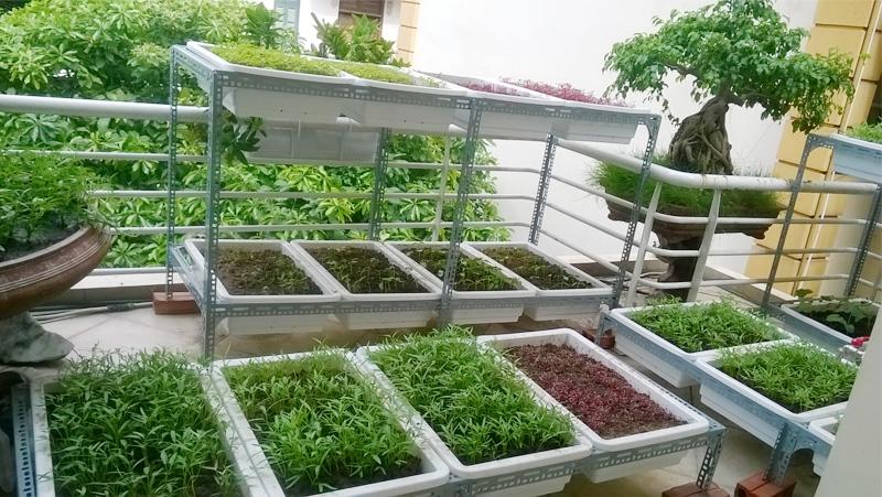 Thi công trọn gói giàn trồng rau trên sân thương, ban công