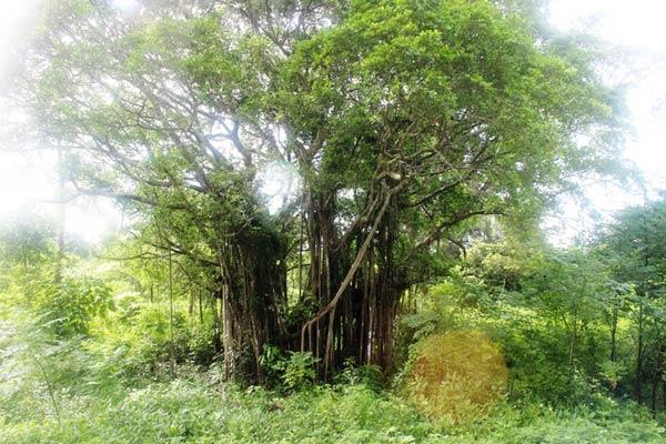 Khám phá rừng chõi nguyên sinh đẹp hút hồn ở Cô Tô 1
