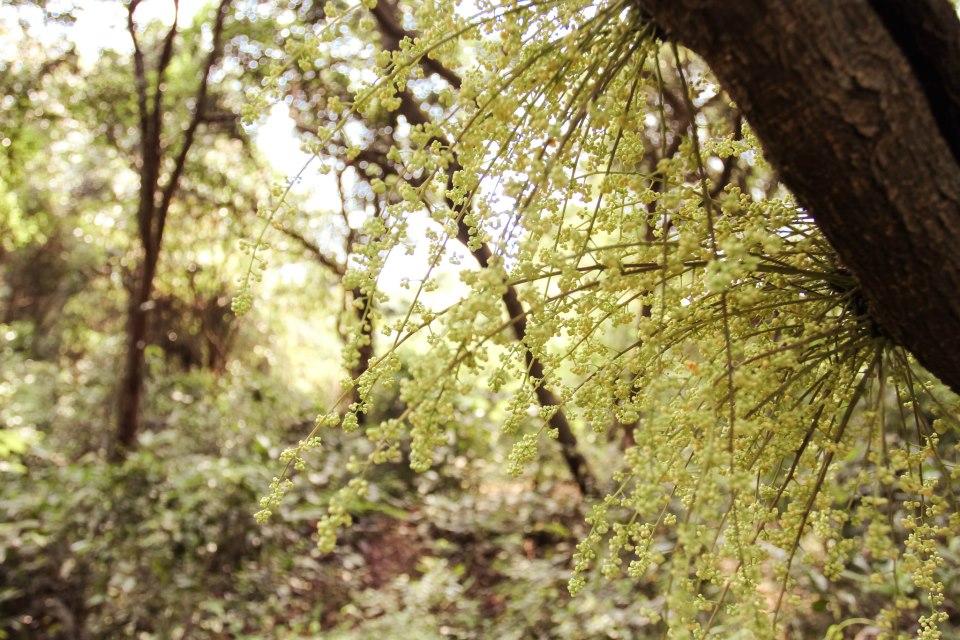 Khám phá rừng chõi nguyên sinh đẹp hút hồn ở Cô Tô