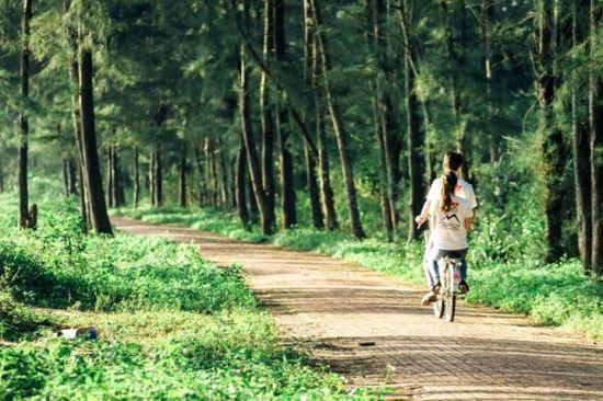 Khám phá rừng chõi nguyên sinh đẹp hút hồn ở Cô Tô 4