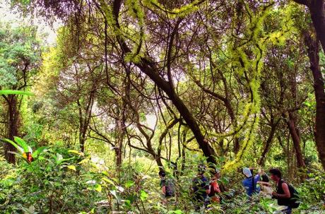 Khám phá rừng chõi nguyên sinh đẹp hút hồn ở Cô Tô 2