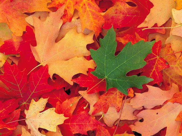 Kết quả hình ảnh cho mùa thu đẹp