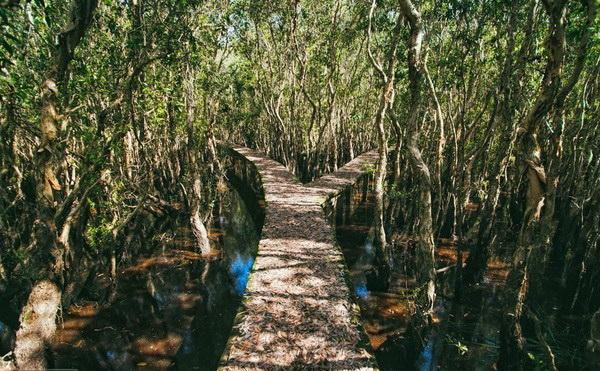 rừng chàm tân lập