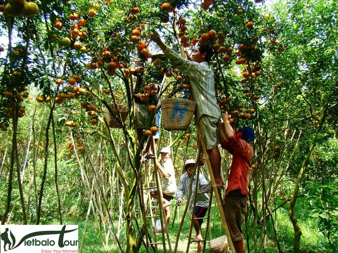 tour mỹ tho, tham quan vườn trái cây miền tây