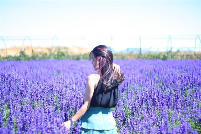 tour đà lạt thăm quan điểm mới vườn hoa lavender