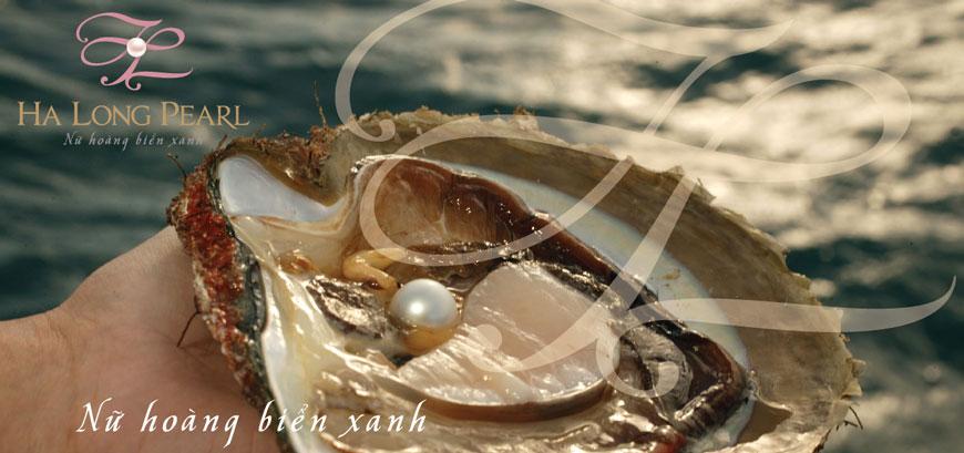 Kiểm tra trai ngọc trên biển