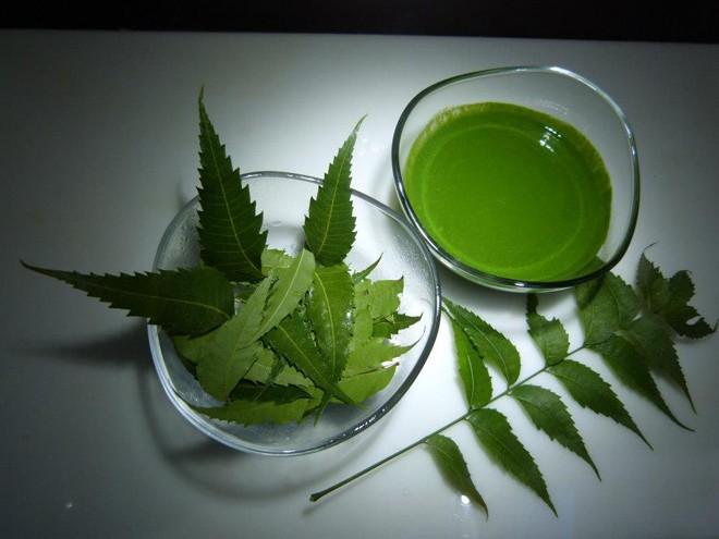 Cây neem khá dễ tìm tại nước ta, cũng là loại thảo dược có công dụng làm đẹp nhanh và hiệu quả.