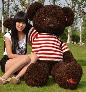 gau bong teddy