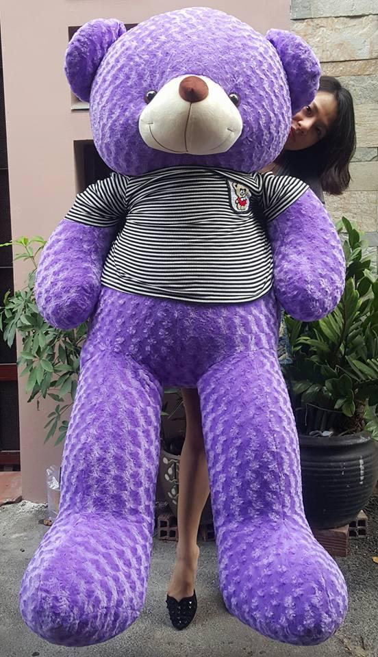 Gấu teddy to màu tím 1m8