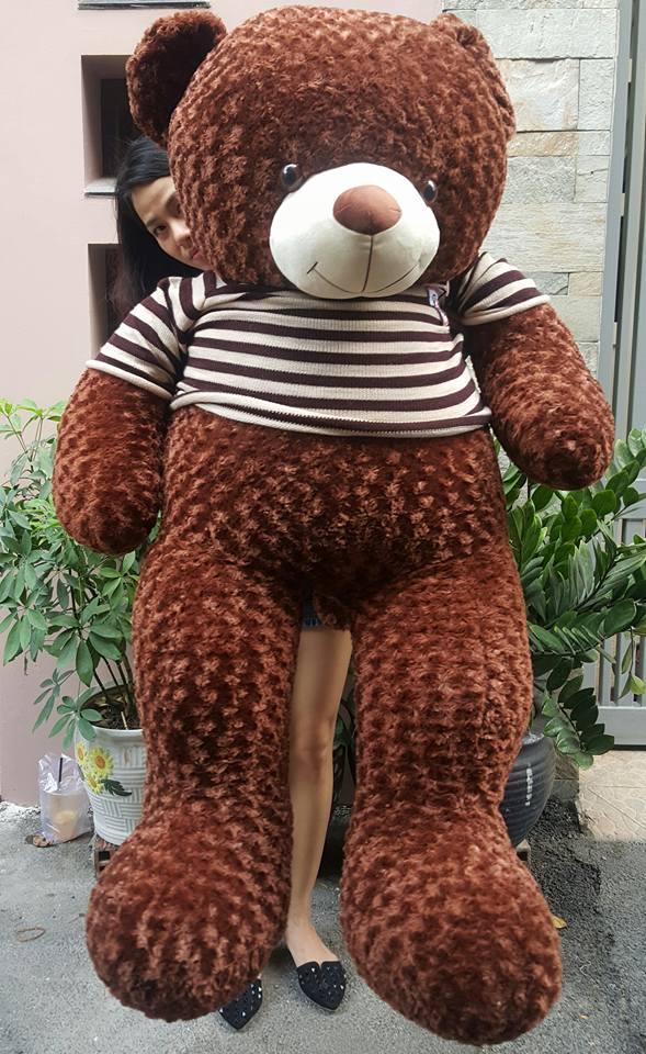 Gấu teddy 1m8 lông xoắn dày đẹp