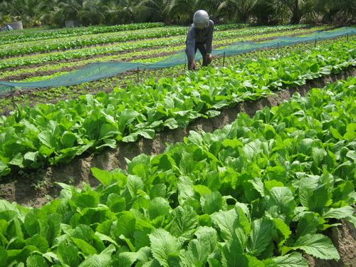 Kết quả hình ảnh cho những bài viết về rau cải xanh
