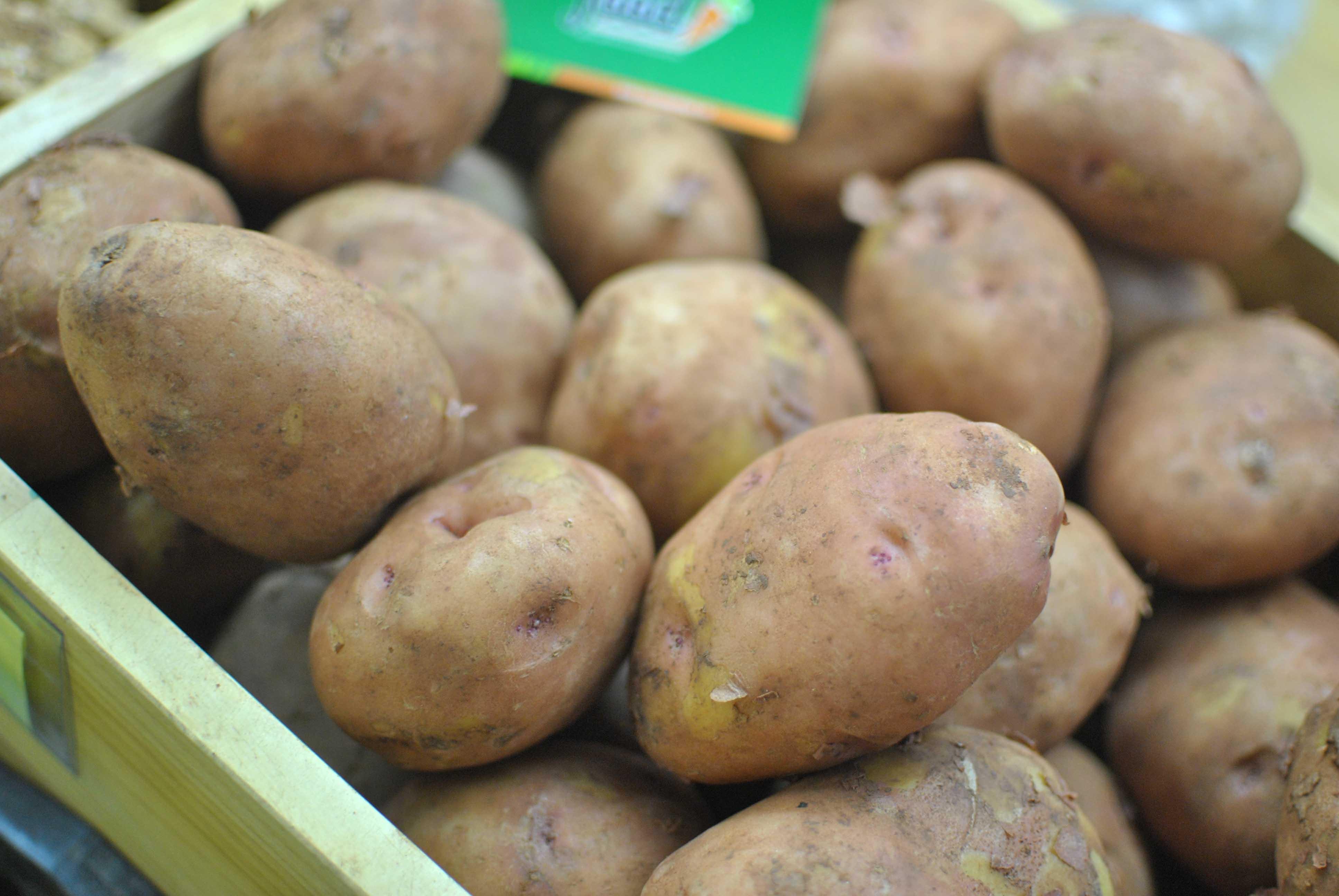 khoai tây da hồng giống mỹ