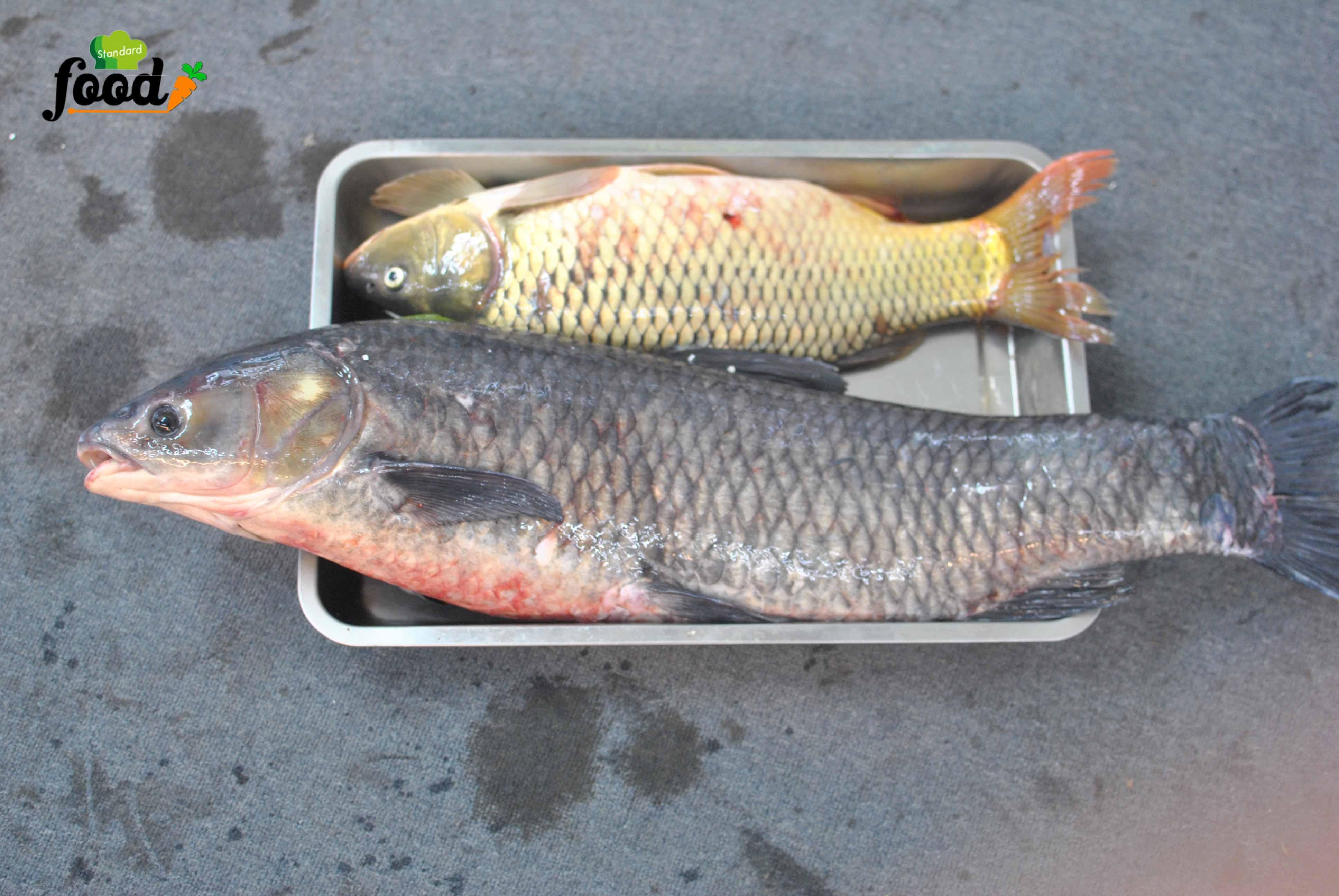 cá sông đà