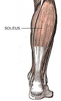 cơ bắp chuối
