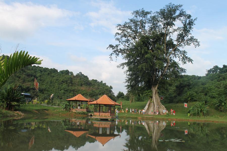 Cây Mộc Thần - Du lịch YangBay - Thác nước trời 1 ngày