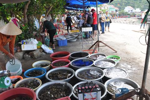 Chợ hải sản Cù Lao Chàm - Du lịch Cù Lao Chàm 1 ngày