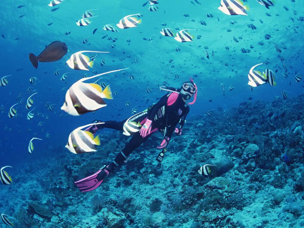 Khám Phá Đại Dương ở Nha Trang