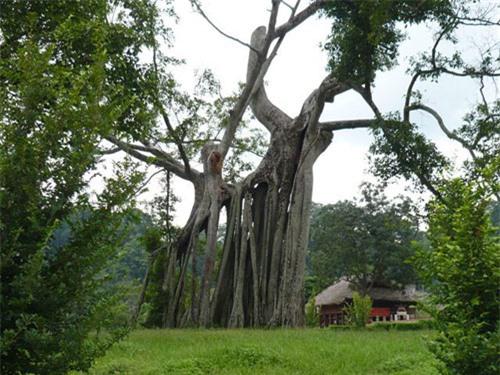 Tour du lịch Tuyên Quang 1 ngày