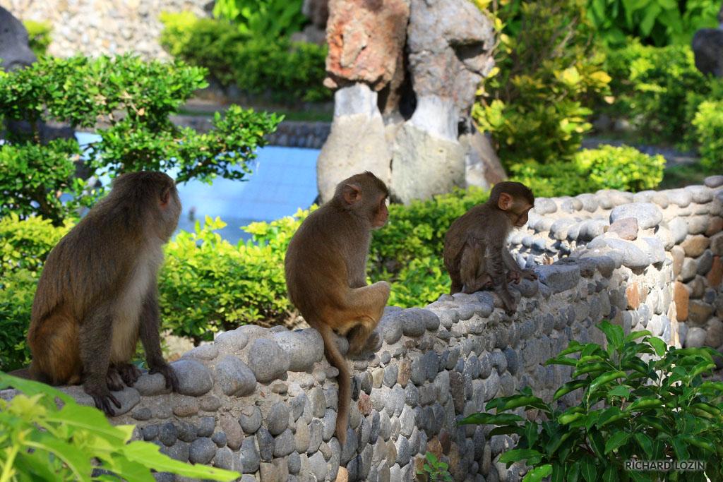 Đảo Khỉ Nha Trang - Du lịch Hà Nội Nha Trang 3 ngày 2 đêm