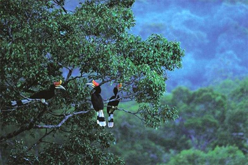 Vườn Quốc Gia Phú Quốc - Địa điểm du lịch Phú Quốc