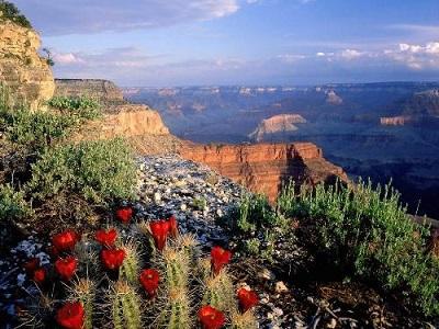 du lịch mỹ vào thời điểm mùa xuân hoặc mùa thu
