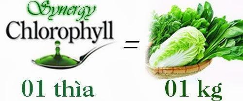 Nước diệp lục Synergy Chlorophyll
