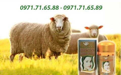 Nhau thai cừu VIP Sheep Placenta