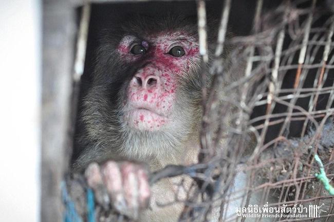 giải cứu chú khỉ tội nghiệp