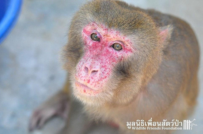 cứu giúp cho chú khỉ tội nghiệp bị nhốt 25 năm
