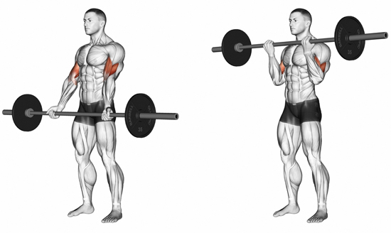 Biceps with Barbell