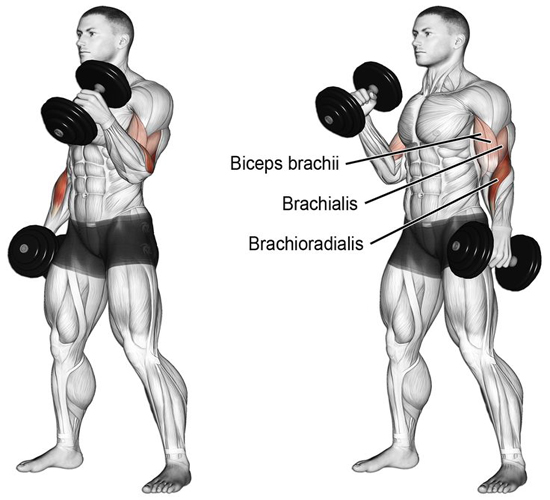 Biceps with Dumbbells