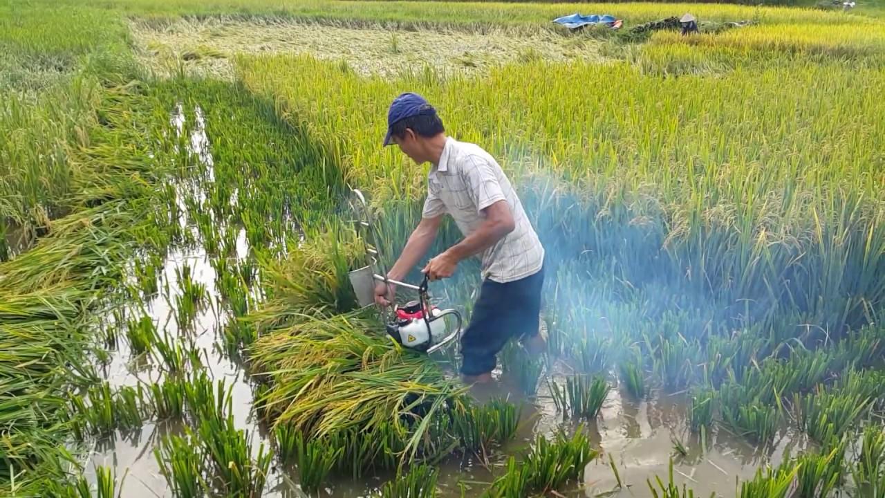 Máy gặt lúa cầm tay HT230